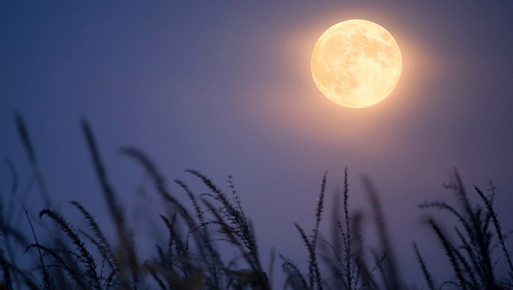 No Kidding. It's a Corn Moon!