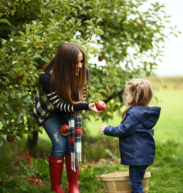 It's Apple Picking Time in Shady Pines